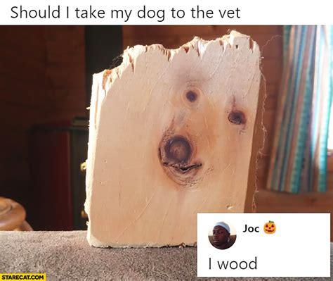 dog   wet  wood piece  wood