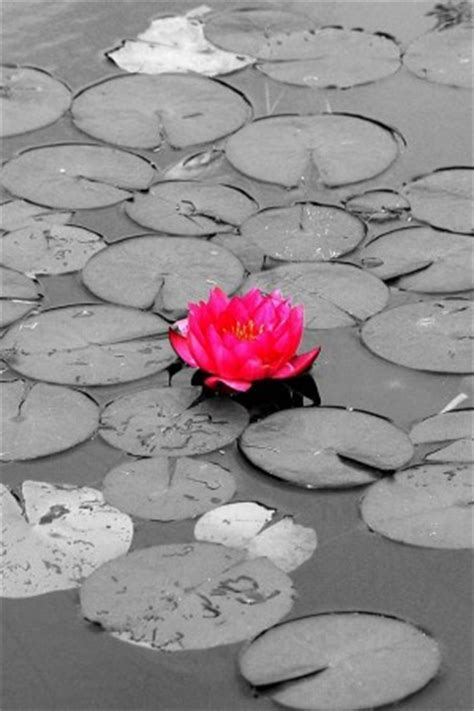 lotus flower cover photo m butterfly pink covers quotes quotesgram