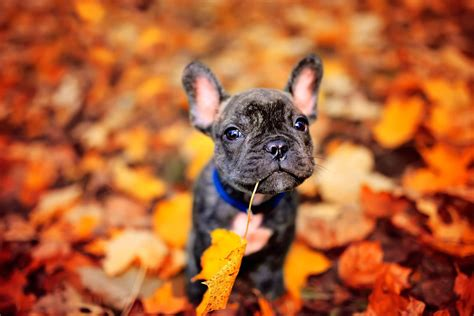 puppy fell on fall pet grooming to keep your happy and healthy