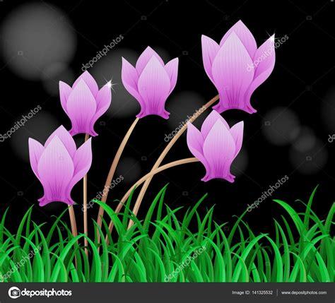 fiori colore viola fiore di ciclamino in colore viola vettoriali stock