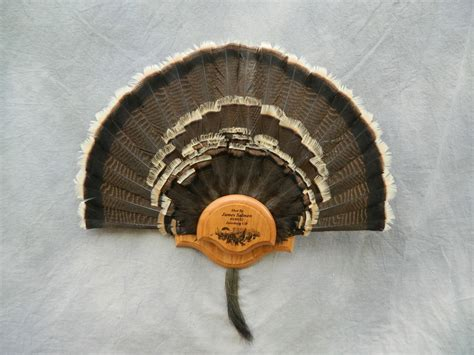 how to mount a turkey fan showpiece taxidermy antler chandeliers deer hoof racks
