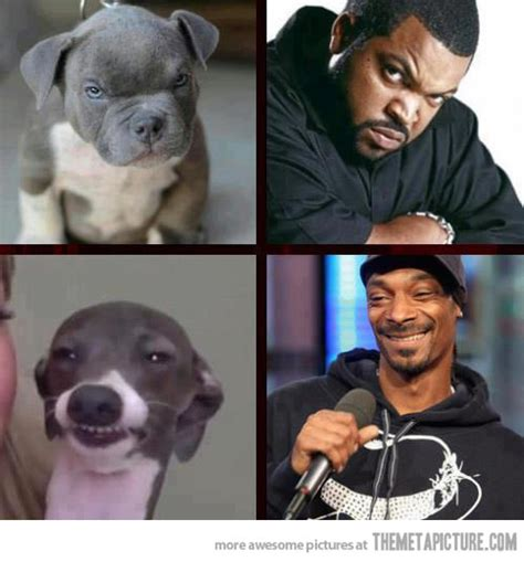 Snoop Dog Meme - the real ice cube and snoop dogg snoop dogg cube and humor