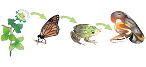cadena alimenticia sencilla para niños actividad 2 ecosistemas terrestres los ecosistemas
