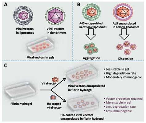 gene therapy flowchart nanoparticle coated viral vectors for gene therapy