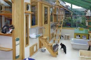 Diy Patio Enclosures Interesting Cat Trees