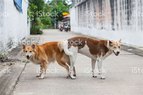 dogs ex animal stock photo 521978131 istock