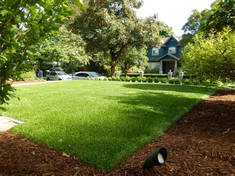 natural solution  chafer infestation  synlawn