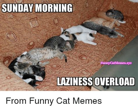 Funny Sunday Memes - funny cat memes of 2017 on sizzle funny cats memes