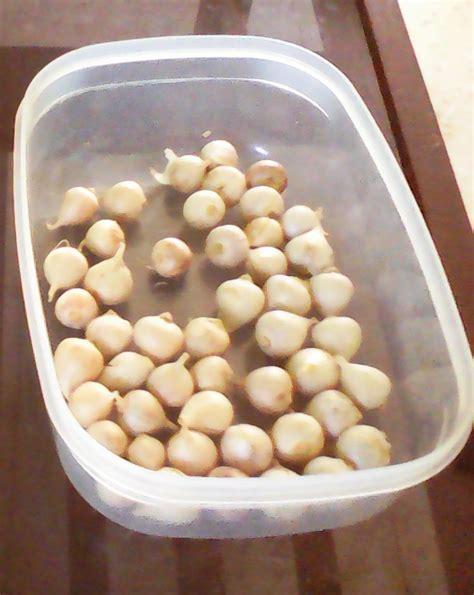 500 Gram Bawang Putih jual bawang putih tunggal jantan bandung bawang putih