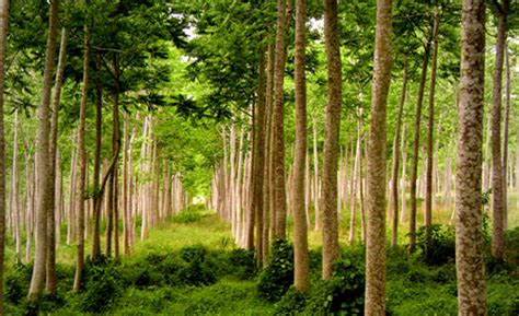 imagenes de los recursos naturales wikipedia los recursos naturales de guatemala y su explotaci 243 n