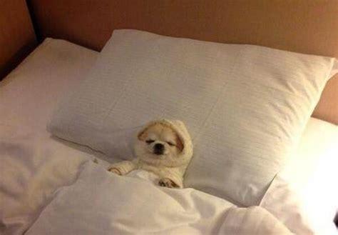 cani a letto nel letto tutto ze 49980