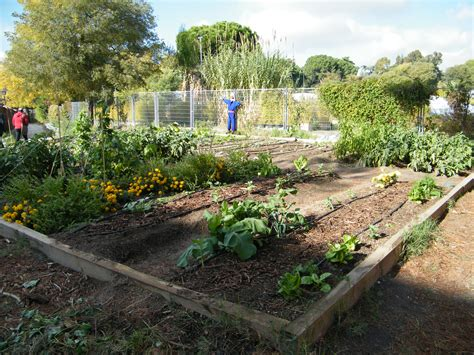 imagenes de jardines urbanos dscf1767 red de huertos urbanos de madrid
