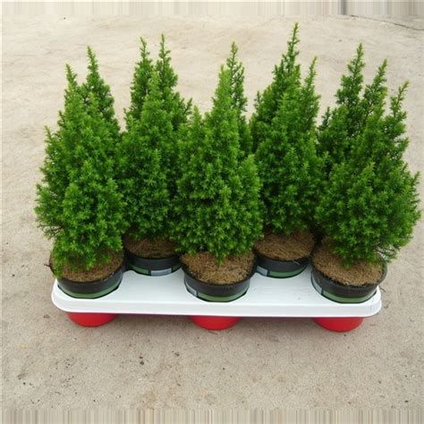 pot for christmas tree
