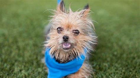 6 year yorkie new shows portion of deadly fresno shooting of noble abc7