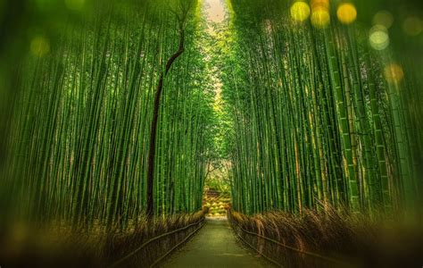 imagenes de paisajes verdes para pantalla fondo de pantalla de bosque camino bamb 250 verde kyoto