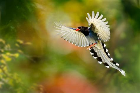 Most Beautiful Flying Birds Hd Images Most Beautifull World Beautiful Bird Flying