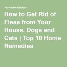 how to get rid of cats in your backyard amazapet homeopathic remedy temporarily relieves