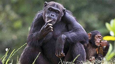 5 Animales Que Deberias Ver by Los 5 Animales M 225 S Inteligentes Mundo