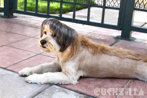 dogs that look like cats cats and dogs that totally look like someone from cushzilla
