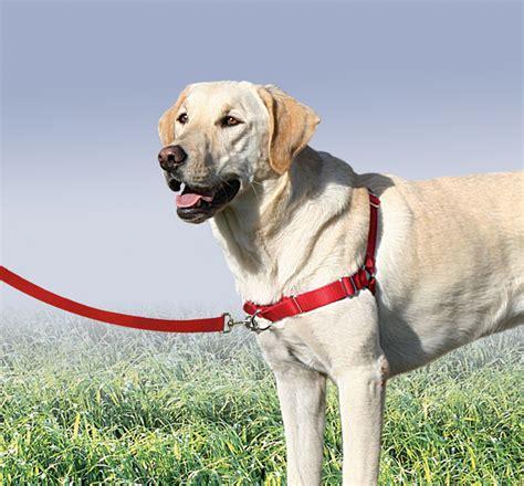 gentle leader gentle leader easy walk harness