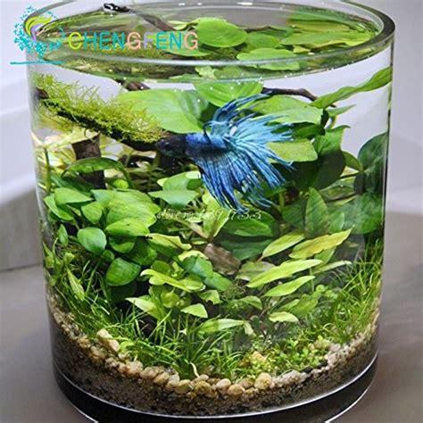piante interne 100 pezzi acquario erba semi mini piante acquatiche