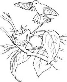 hummingbird coloring page free printable hummingbird coloring pages for