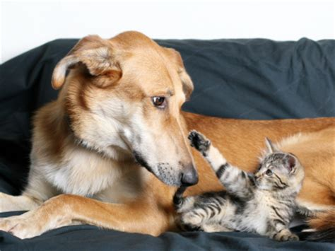 introducing cats and dogs how to make a cat and get along buying savings tips consumer advice