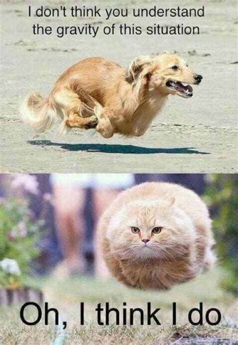 Funny Animal Memes Pictures - top 30 funny animal memes quotes words sayings