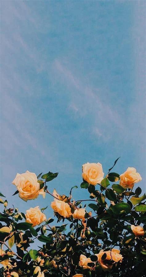 marvelous flower wallpaper  sytle   iphone