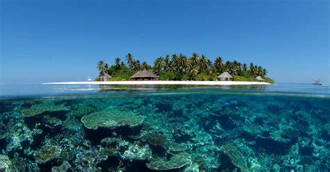 maldives dive buceo en maldivas