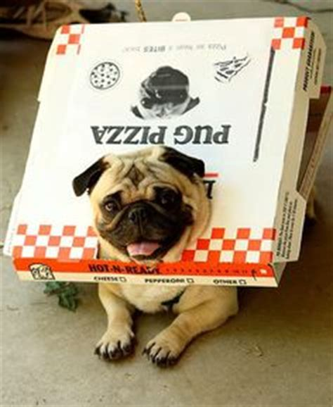 pug pizza 1000 images about pugs on pug a pug and pug