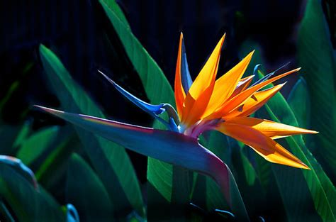 cute bird  paradise flower weneedfun