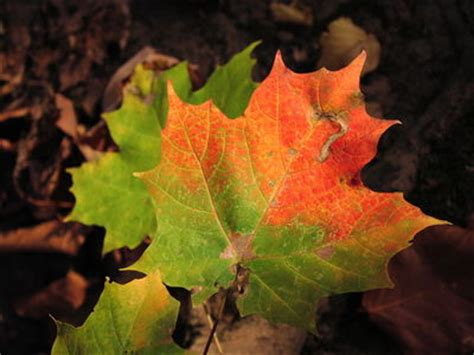 what causes the leaves to change color in the fall what causes leaves to change color farmers almanac