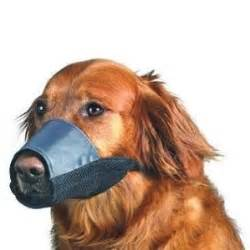 muzzle petsmart before you let somebody muzzle your here are some important things to blogs