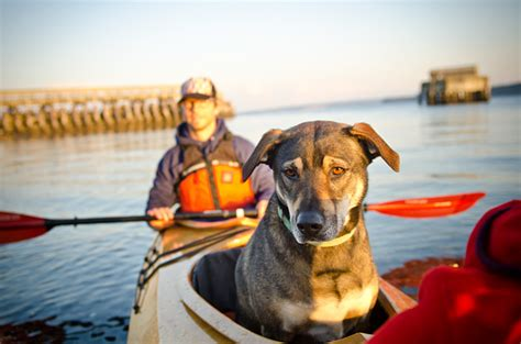 dog vs boat triple sea kayak kit and plans the family kayak