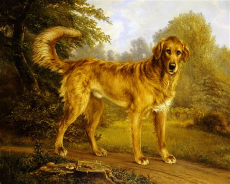 doty golden retrievals our dogs ground us in the now