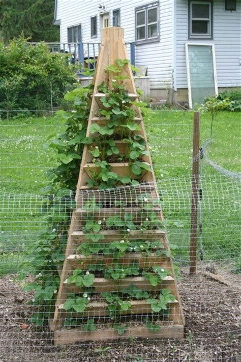 Strawberry Tower Planter by Strawberry Plant Pyramid Garden Plants