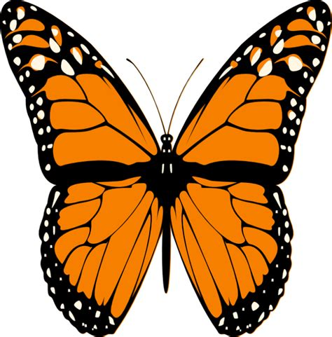 Butterfly Tattoo Butterfly Picture Butterfly Butterfly Images Of Animated Butterflies