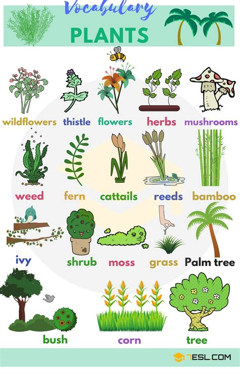 garden plants names and pictures list of plant and flower names in english with pictures