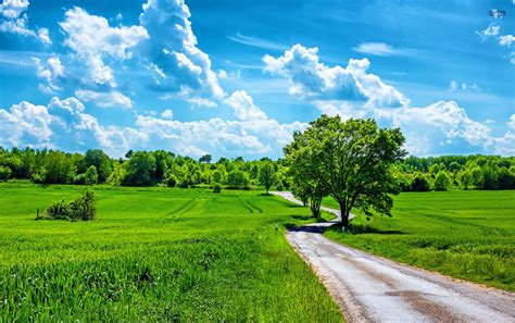 grass fields road trees clouds wallpapers grass fields