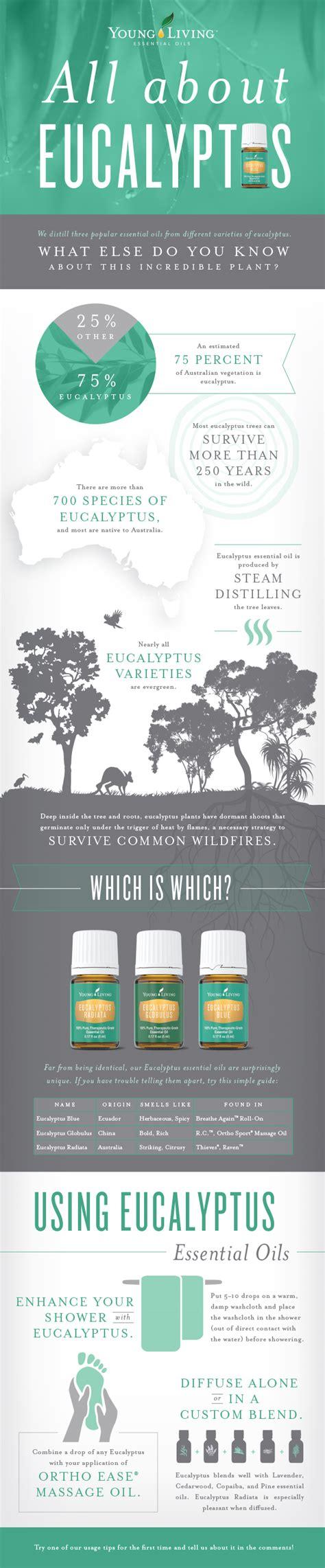 Living Eucalyptus Radiata how to use eucalyptus eucalyptus essential
