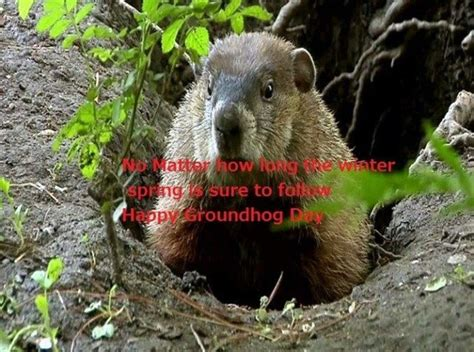 groundhog day keep the talent happy 107 best holidays groundhog day images on