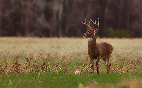 Are Whitetail Deer Color Blind whitetail deer facts outdoor channel