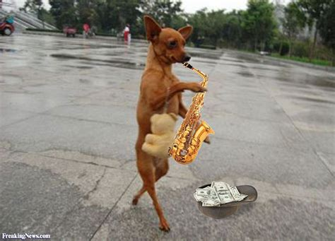 play with puppies for a day sax day pictures freaking news