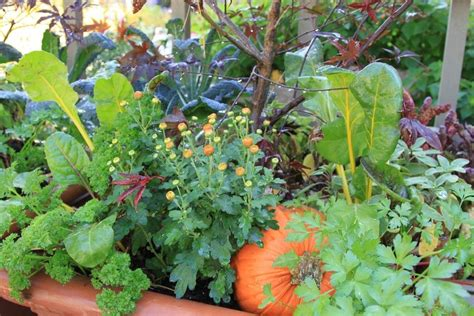 Plant These Amazing Flowers And See How Your Vegetable Vegetable Garden Planting