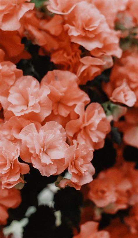 beautiful flower  peach color flower summer spring