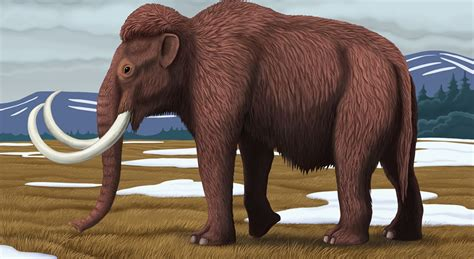 mammoth images woolly mammoth fact file national geographic