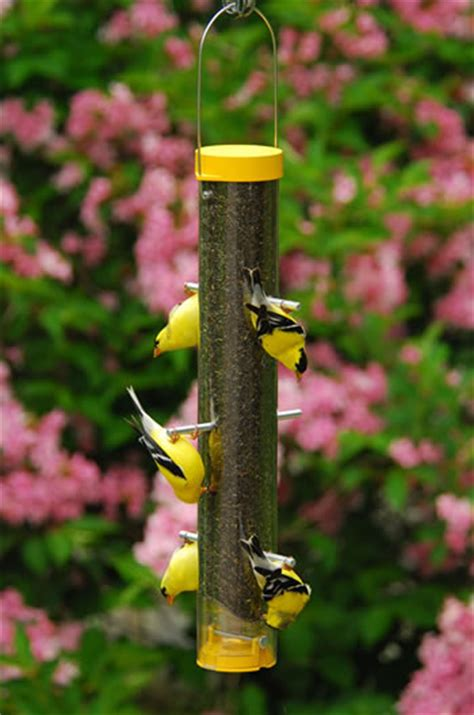 nyjer thistle seed bird feeders goldfinch finches
