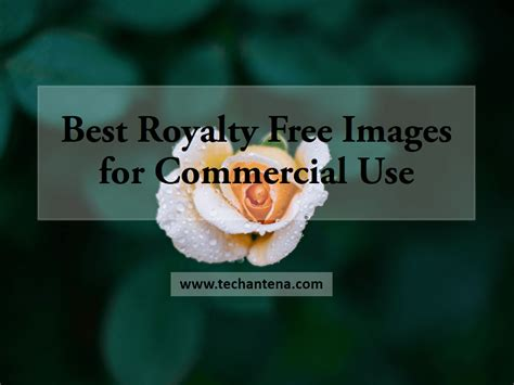 best free royalty free copyright free images for commercial use clipart free