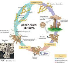 Alat Tes Dna Burung gambar struktur mitokondria salah satu organel sel biologi sma kelas xi